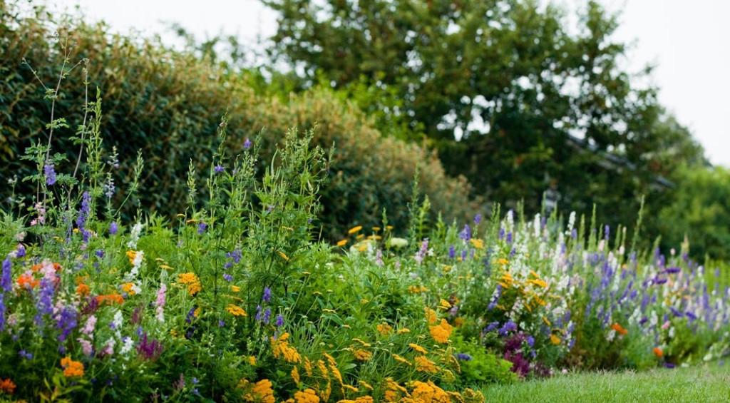 A lovely wild garden by Nelson Byrd Woltz