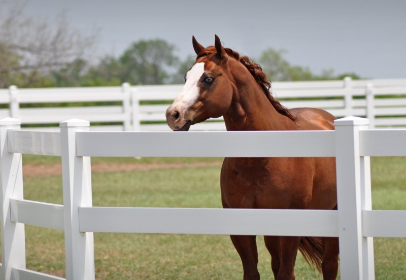 "Gunners Special Nite, a.k.a. ""Bailey,"" enjoying the stud life (Photo: Wendy Lind)"