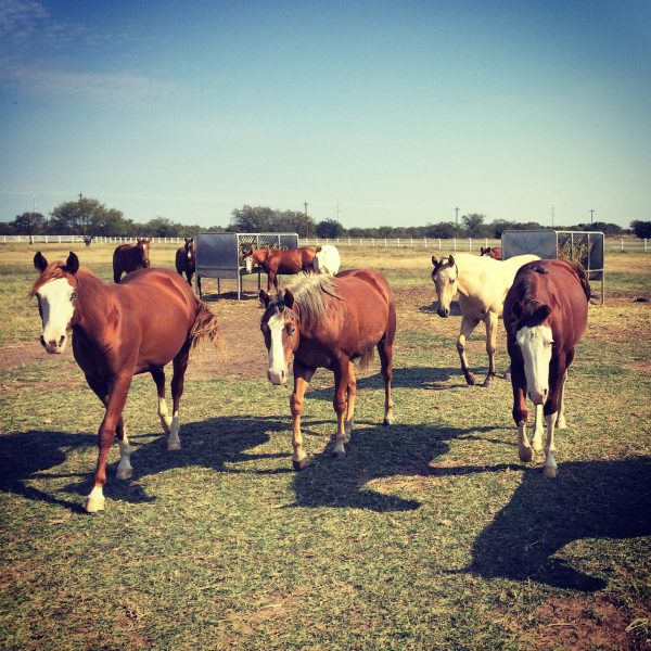 Here come the girls: yearling fillies