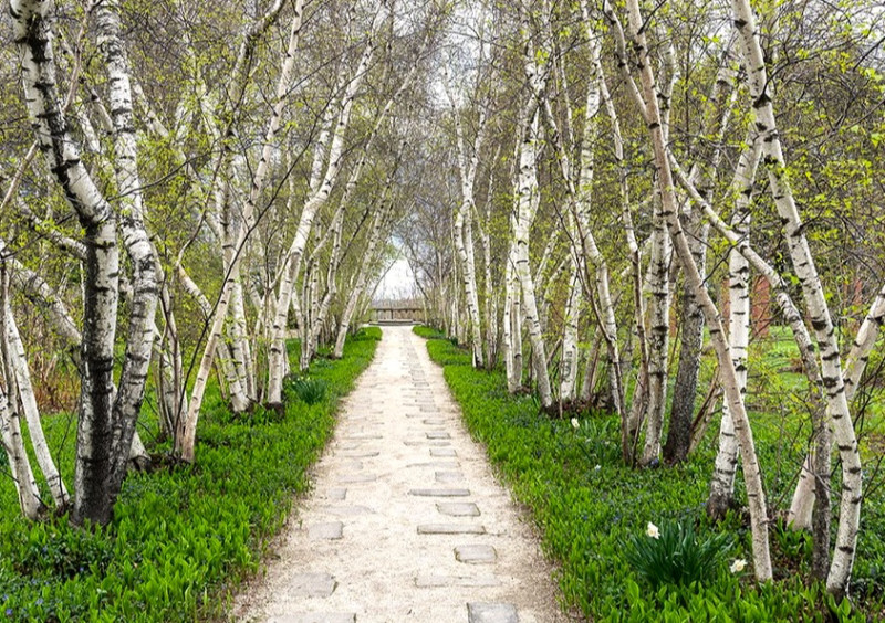"This birch allee in Akron, Ohio, transports us to another world. Stan Hywet Hall & Gardens, ""Best Garden Allees,"" ArchitecturalDigest.com."