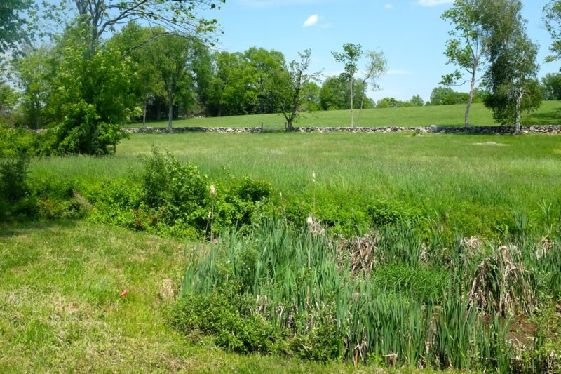 View across the overgrown pond/stream, from future field annex, across to hilly meadow