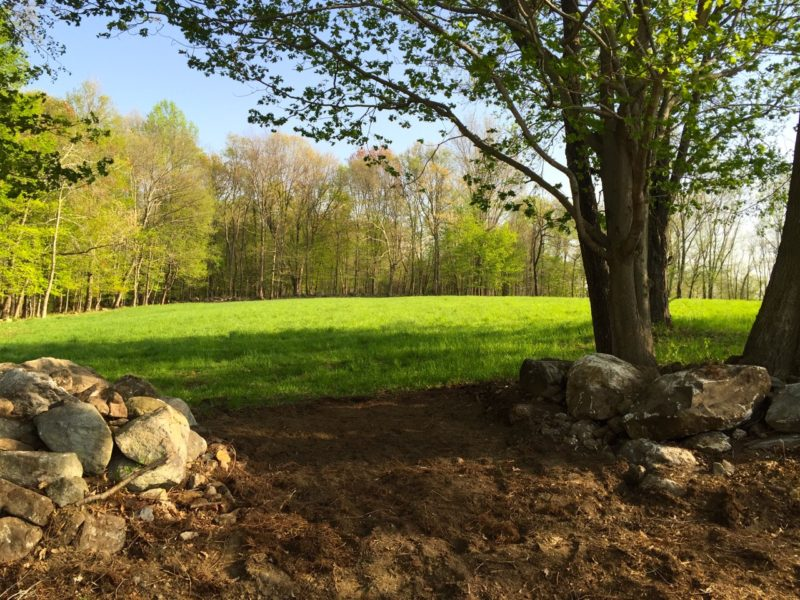 Beside the pasture a new opening in the stone wall, part of our future riding trails.