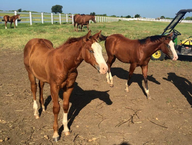 Gunners Special Nite foals