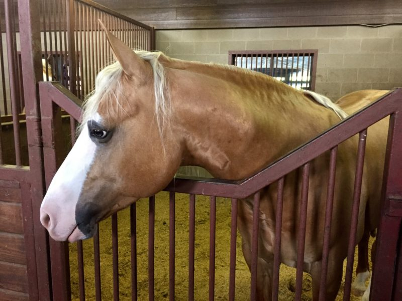 Our handsome boy at home at TM Reining Horses