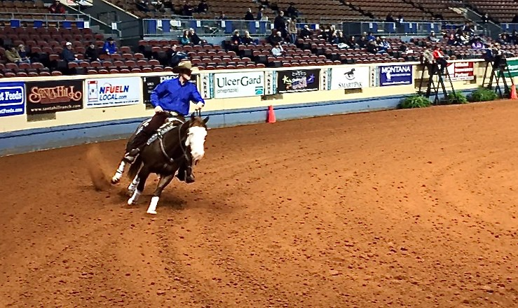 A colt of ours showing in the qualifying rounds